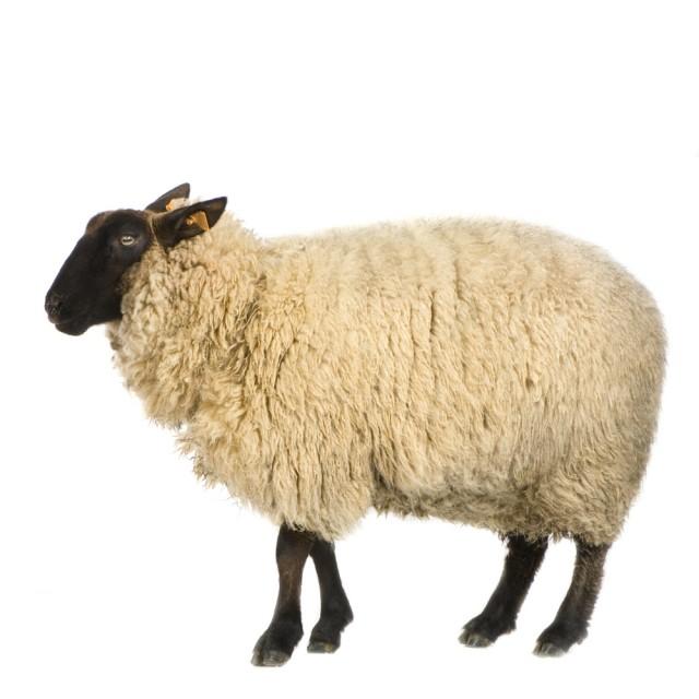注目秋冬アイテム6選 ヒントは羊足 | 繊研新聞